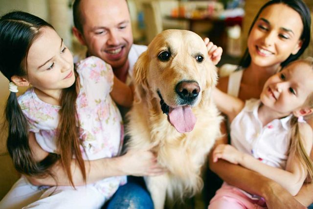 Fundamental Pet Care Tips: What Every Pets Holidays Lover Should Know